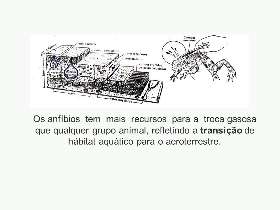 adalberto Os anfíbios tem mais recursos para a troca gasosa que qualquer grupo animal, refletindo a transição de hábitat aquático para o aeroterrestre