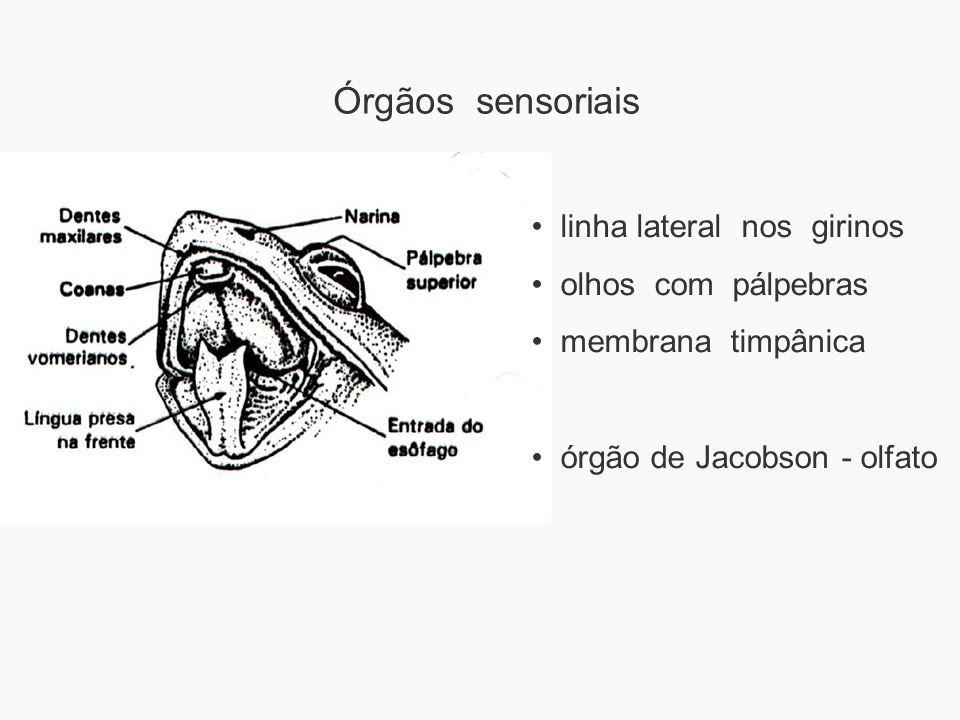 adalberto Órgãos sensoriais linha lateral nos girinos olhos com pálpebras membrana timpânica órgão de Jacobson - olfato