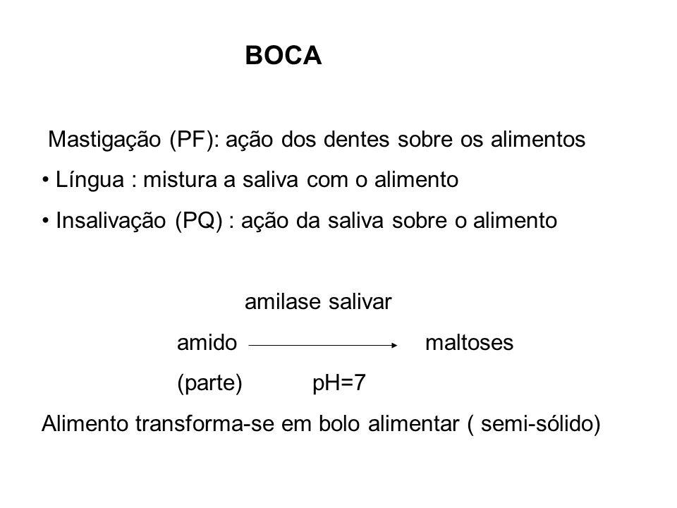 BOCA Mastigação (PF): ação dos dentes sobre os alimentos Língua : mistura a saliva com o alimento Insalivação (PQ) : ação da saliva sobre o alimento a