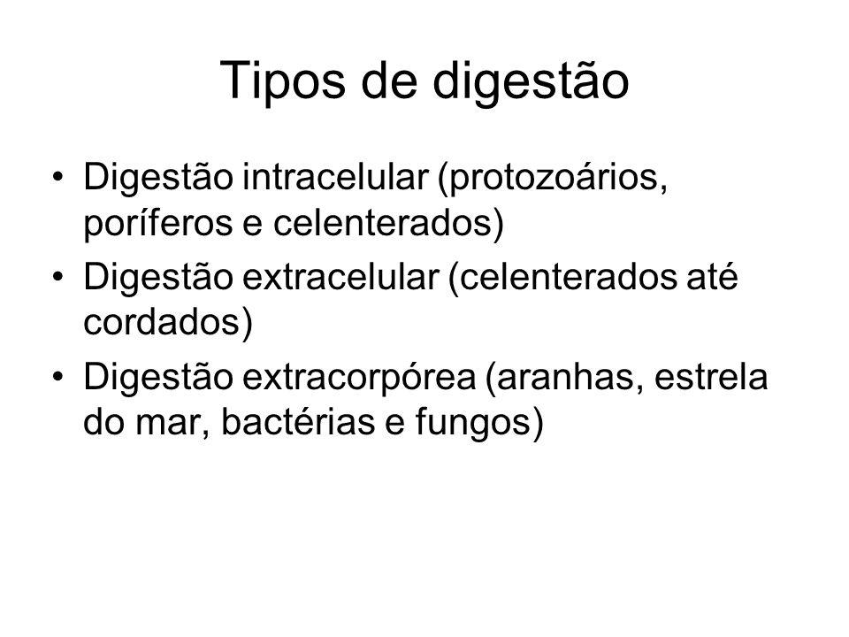 Tipos de digestão Digestão intracelular (protozoários, poríferos e celenterados) Digestão extracelular (celenterados até cordados) Digestão extracorpó