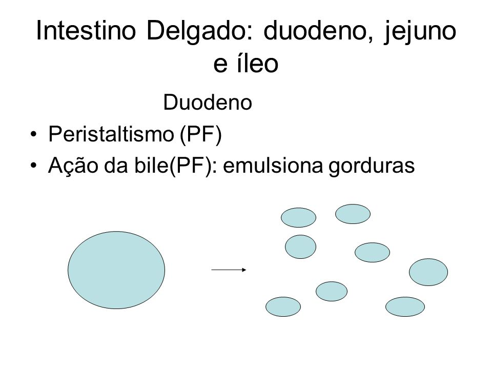 Intestino Delgado: duodeno, jejuno e íleo Duodeno Peristaltismo (PF) Ação da bile(PF): emulsiona gorduras