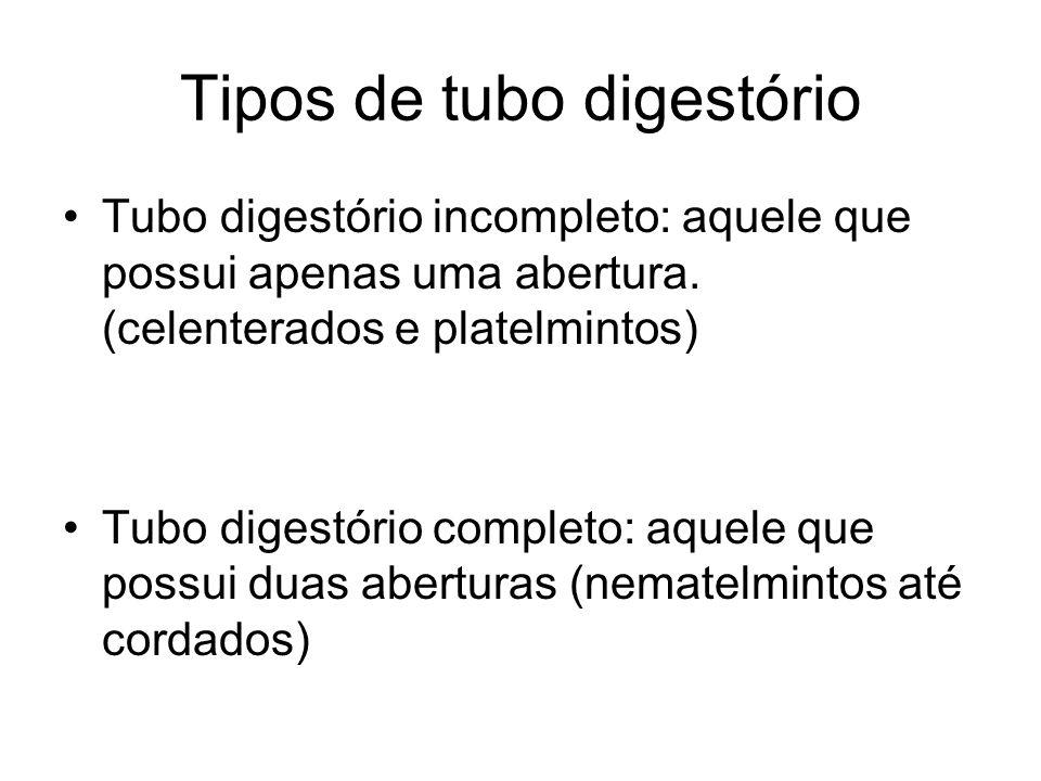 Tipos de tubo digestório Tubo digestório incompleto: aquele que possui apenas uma abertura. (celenterados e platelmintos) Tubo digestório completo: aq