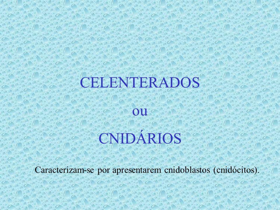 CELENTERADOS ou CNIDÁRIOS Caracterizam-se por apresentarem cnidoblastos (cnidócitos).
