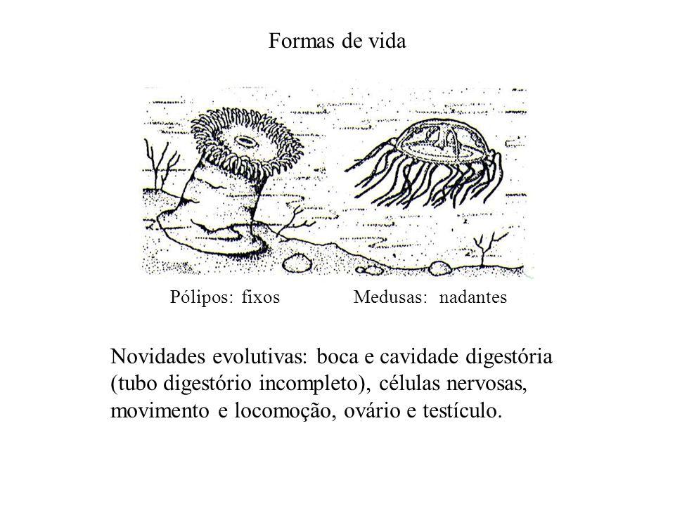 Formas de vida Pólipos: fixosMedusas: nadantes Novidades evolutivas: boca e cavidade digestória (tubo digestório incompleto), células nervosas, movime