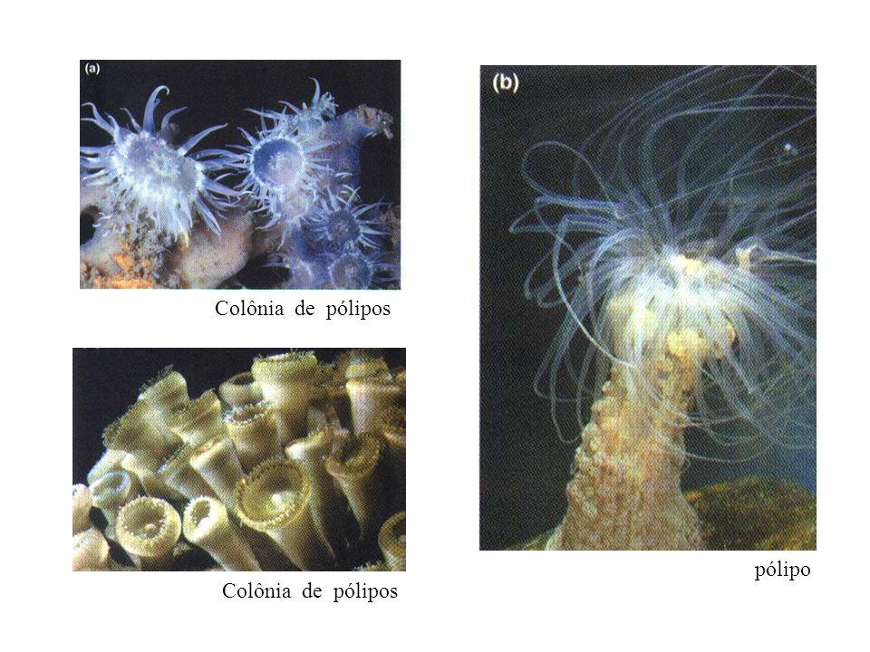 Classe dos Hidrozoários Hidra em diversas posições sobre uma planta aquática Hydra.