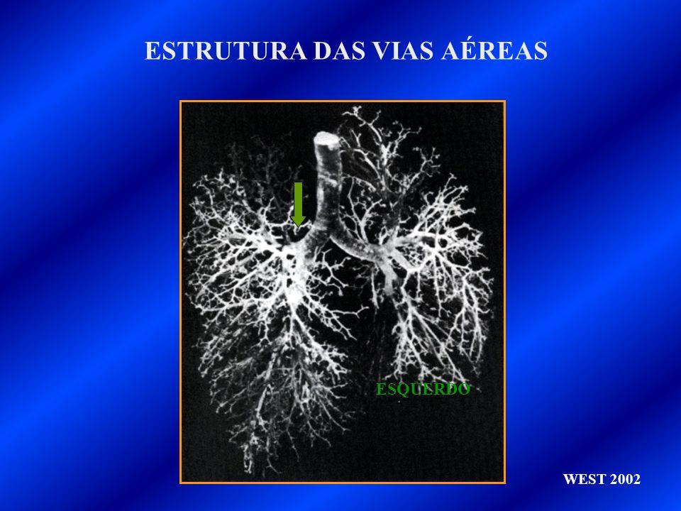 TRANPORTE DE O 2 COMBINADO COM A HEMOGLOBINA HEMOGLOBINA É UMA PROTEINA CONJUGADA Hb PROTEINA (GLOBINA) + PIGMENTO ( HEME) HEME COMPOSTO DE FERRO-PORFIRINA GLOBINA 4 CADEIAS POLIPEPITÍDEAS, 2, 2 CADA ION FERRO SE LIGA DE FORMA REVERSÍVEL A UMA MOLÉCULA DE O2 CADA MOLÉCULA DE Hb TRANSPORTA QUATRO DE O2 A Hb (HEMOGLOBINA REDUZIDA) COMBINA-SE COM O2 PASSANDO `A FORMA OXIDADA OXIHEMOGLOBINA A OXIHEMOGLOBINA É MAIS ÁCIDA QUE A Hb REDUZIDA O ION FERRO ESTÁ SEMPRE NA FORMA Fe ++