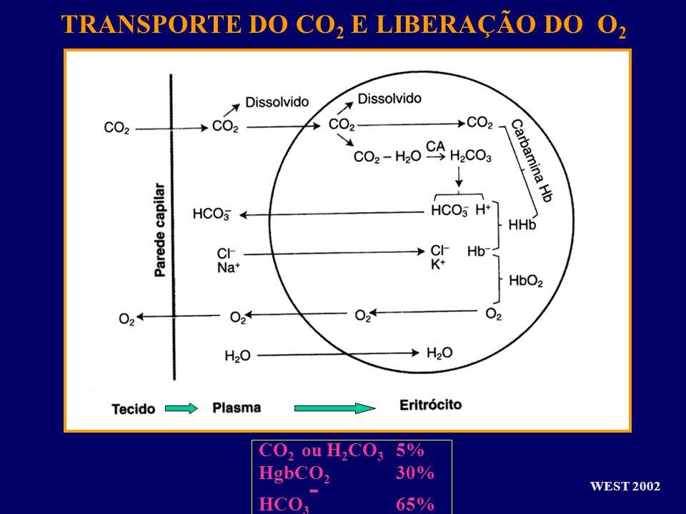 WEST 2002 TRANSPORTE DO CO 2 E LIBERAÇÃO DO O 2 CO 2 ou H 2 CO 3 5% HgbCO 2 30% HCO 3 - 65%