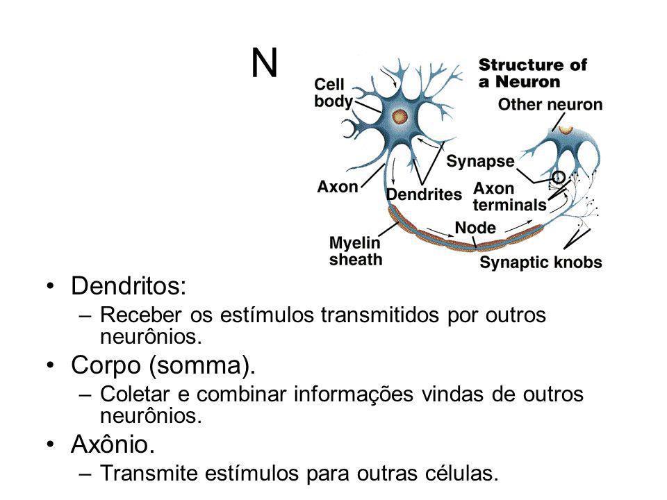 Neurônio Dendritos: –Receber os estímulos transmitidos por outros neurônios. Corpo (somma). –Coletar e combinar informações vindas de outros neurônios