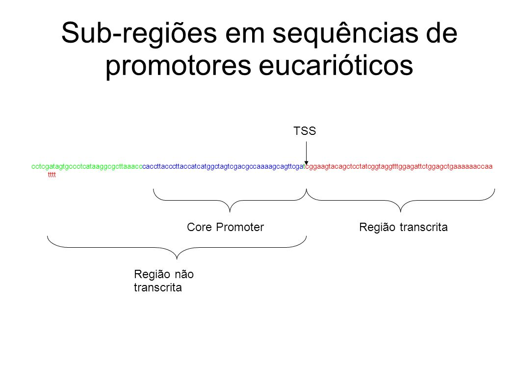 Sub-regiões em sequências de promotores eucarióticos cctcgatagtgccctcataaggcgcttaaacccaccttacccttaccatcatggctagtcgacgccaaaagcagttcgatcggaagtacagctcctatcggtaggtttggagattctggagctgaaaaaaccaa tttt Core PromoterRegião transcrita Região não transcrita TSS