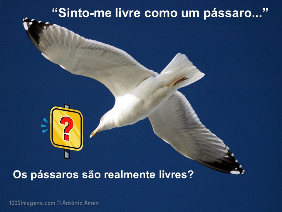 Sinto-me livre como um pássaro... Os pássaros são realmente livres?