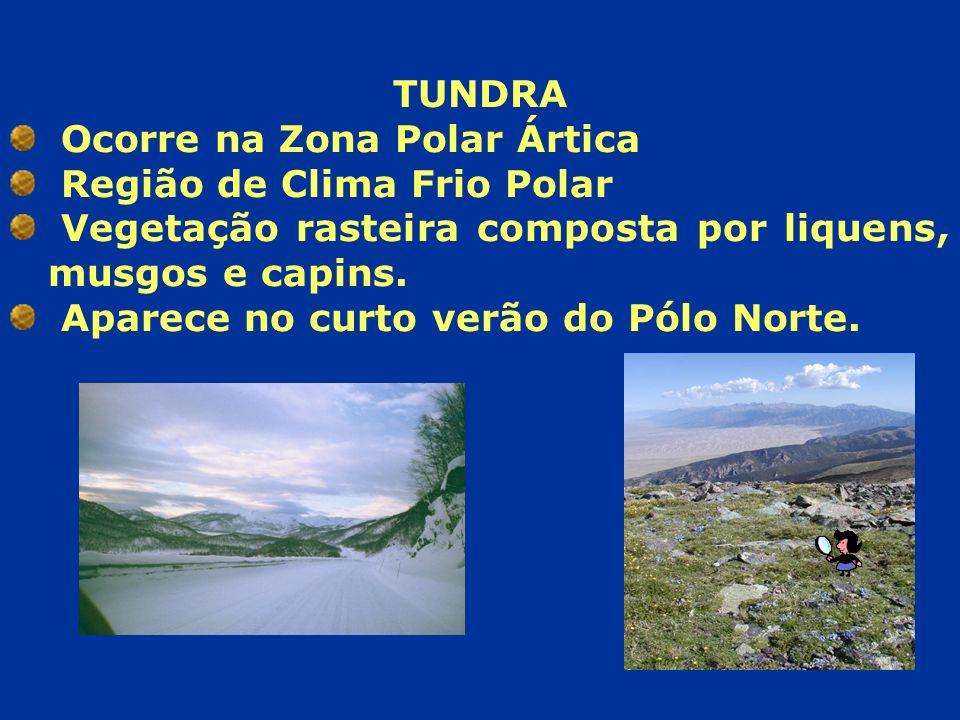 TUNDRA Ocorre na Zona Polar Ártica Região de Clima Frio Polar Vegetação rasteira composta por liquens, musgos e capins. Aparece no curto verão do Pólo