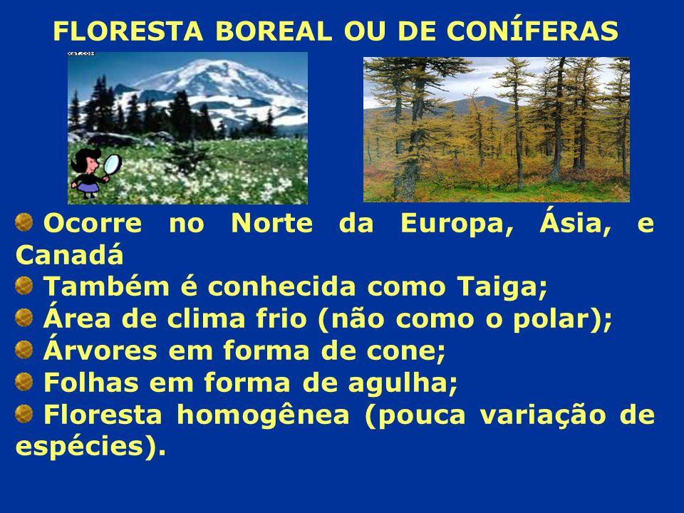 FLORESTA BOREAL OU DE CONÍFERAS Ocorre no Norte da Europa, Ásia, e Canadá Também é conhecida como Taiga; Área de clima frio (não como o polar); Árvore