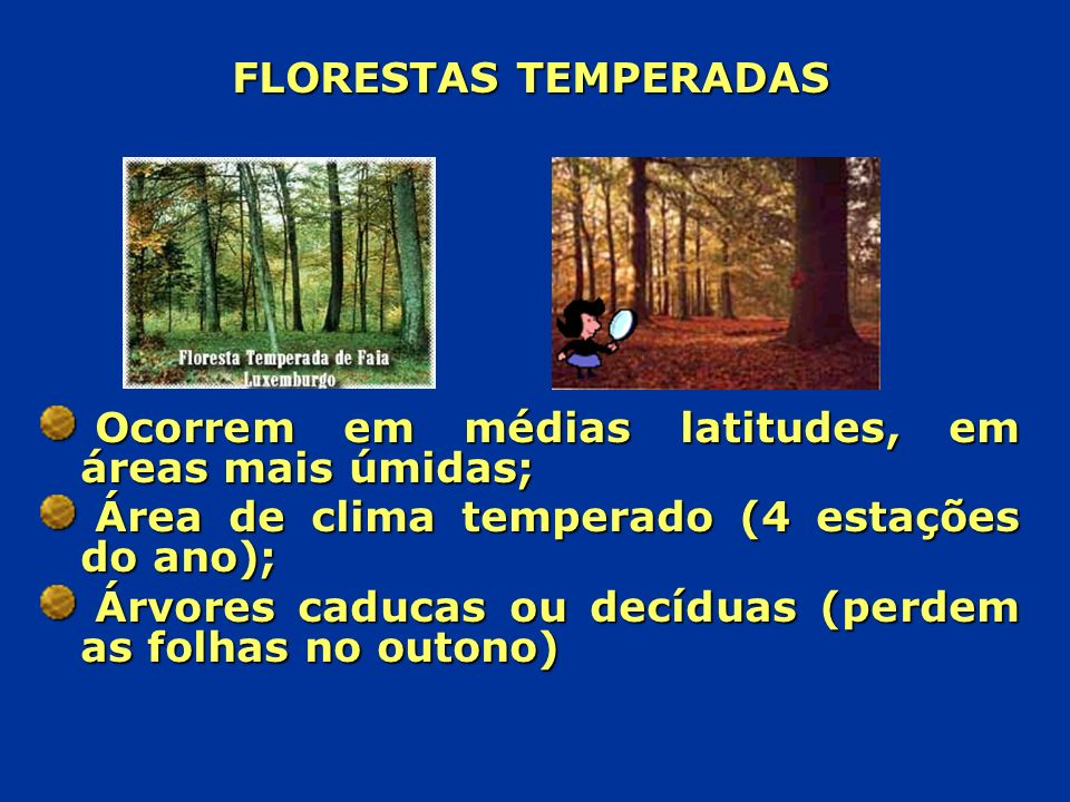 FLORESTAS TEMPERADAS Ocorrem em médias latitudes, em áreas mais úmidas; Área de clima temperado (4 estações do ano); Árvores caducas ou decíduas (perd