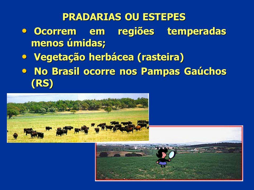 PRADARIAS OU ESTEPES O Ocorrem em regiões temperadas menos úmidas; V Vegetação herbácea (rasteira) N No Brasil ocorre nos Pampas Gaúchos (RS)