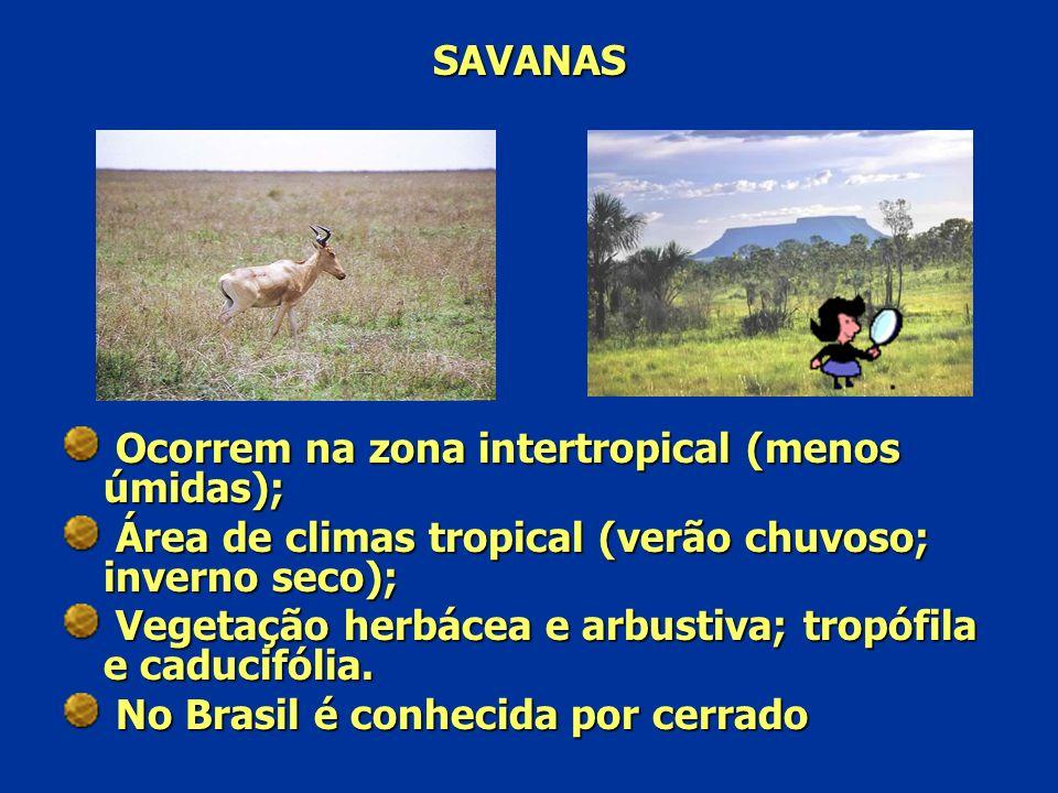 SAVANAS Ocorrem na zona intertropical (menos úmidas); Área de climas tropical (verão chuvoso; inverno seco); Vegetação herbácea e arbustiva; tropófila