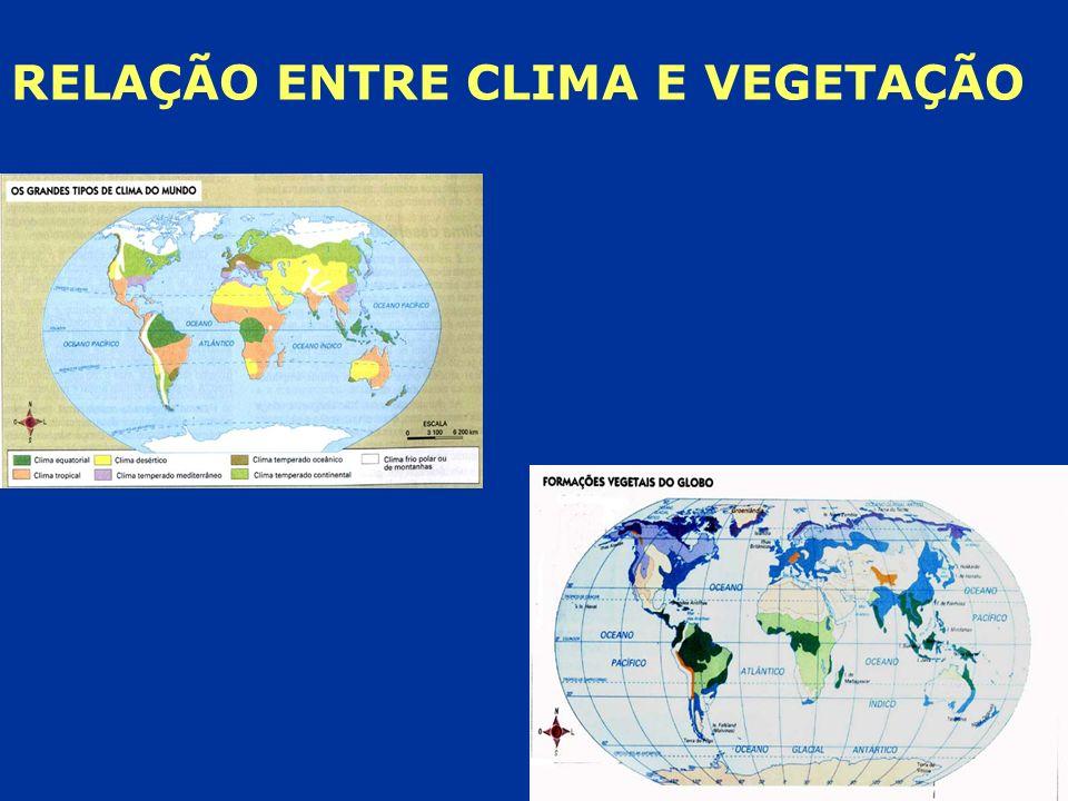 RELAÇÃO ENTRE CLIMA E VEGETAÇÃO