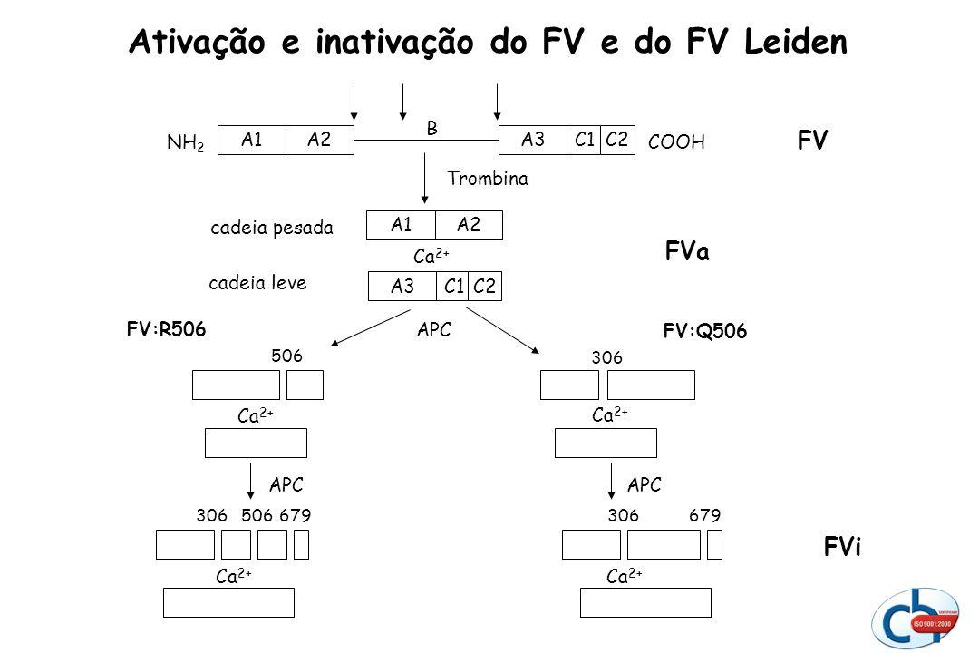 Ativação e inativação do FV e do FV Leiden A3C1C2A2A1 COOHNH 2 FV B Trombina APC FVa A3C1C2 Ca 2+ A2A1 cadeia pesada cadeia leve Ca 2+ 506 FV:R506 FV: