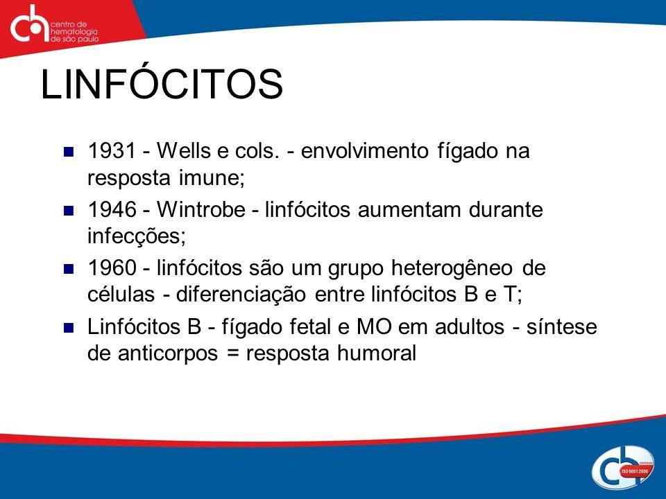 LINFÓCITOS 1931 - Wells e cols. - envolvimento fígado na resposta imune; 1946 - Wintrobe - linfócitos aumentam durante infecções; 1960 - linfócitos sã