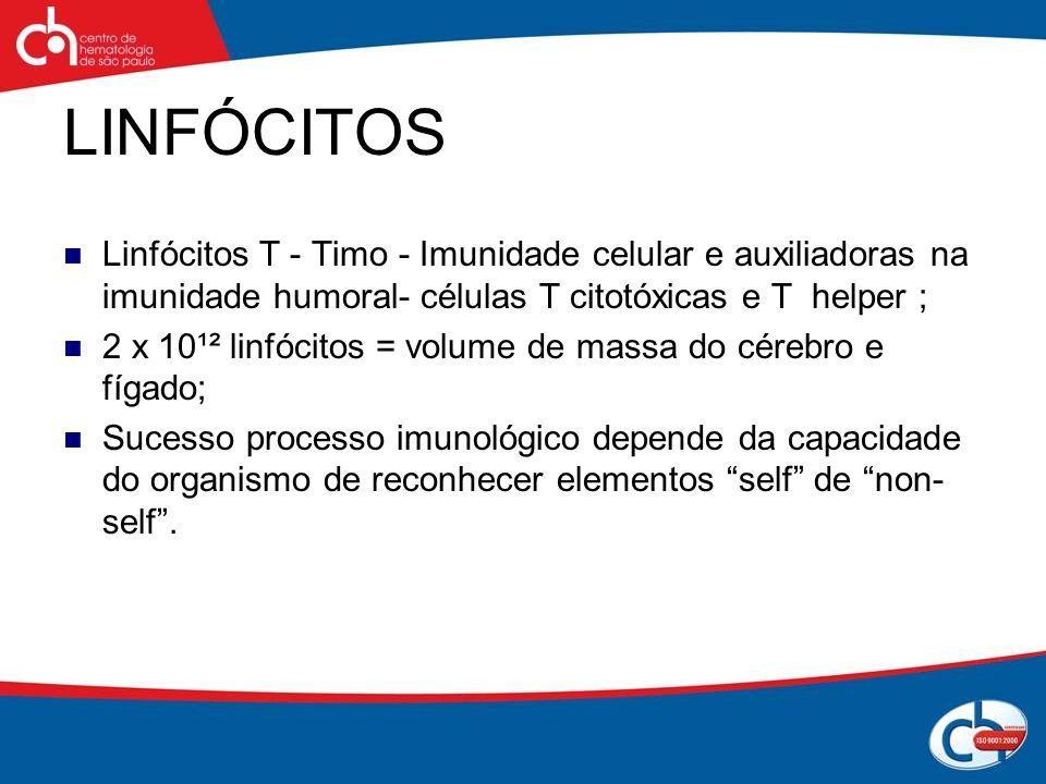 LINFÓCITOS Linfócitos T - Timo - Imunidade celular e auxiliadoras na imunidade humoral- células T citotóxicas e T helper ; 2 x 10¹² linfócitos = volum
