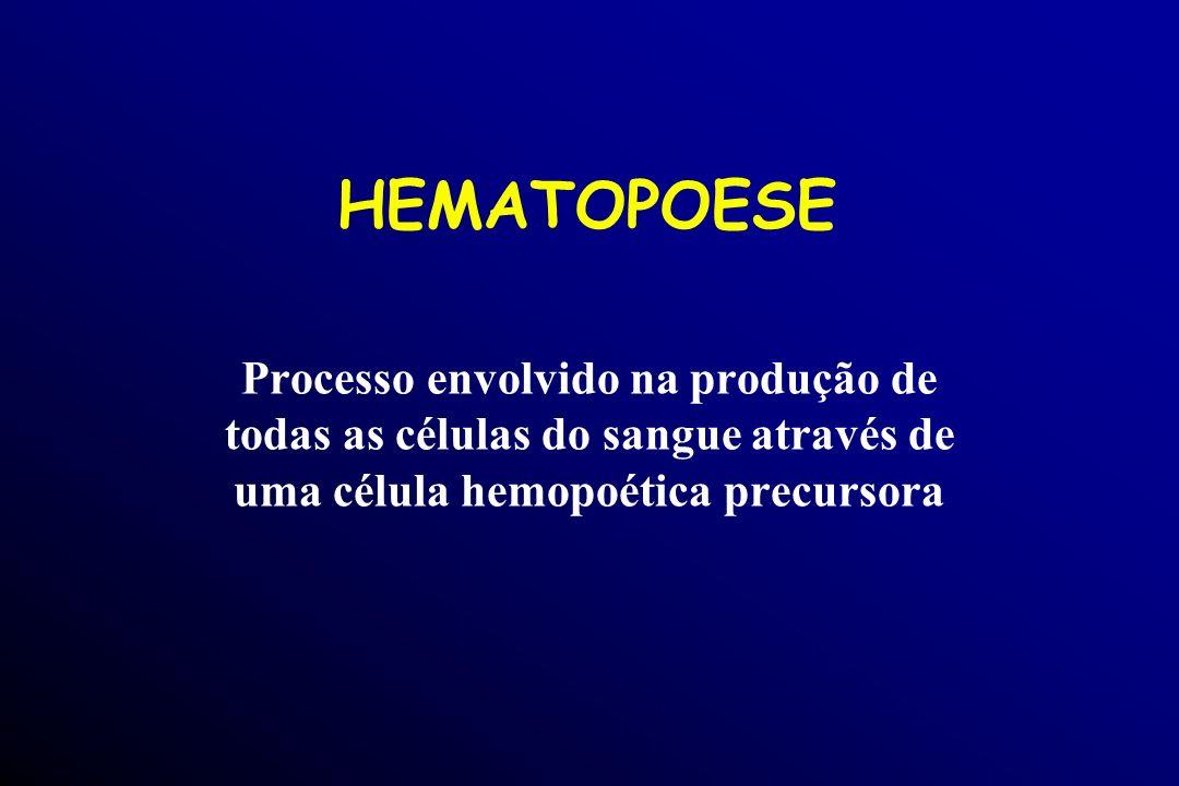 HEMATOPOESE Processo envolvido na produção de todas as células do sangue através de uma célula hemopoética precursora