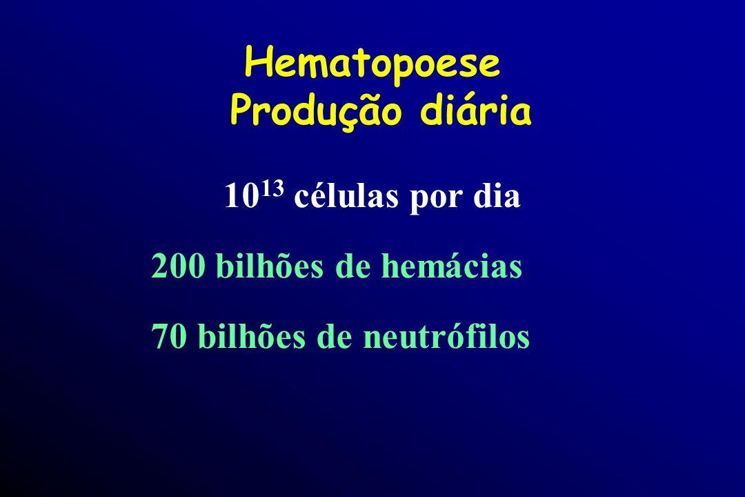 Hematopoese Produção diária 10 13 células por dia 200 bilhões de hemácias 70 bilhões de neutrófilos