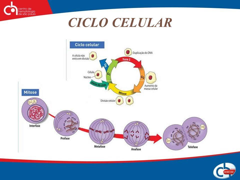 Principais drogas utilizadas no tratamento do câncer Alquilantes Capazes de substituir em outra molécula um átomo de hidrogênio por um radical alquil.