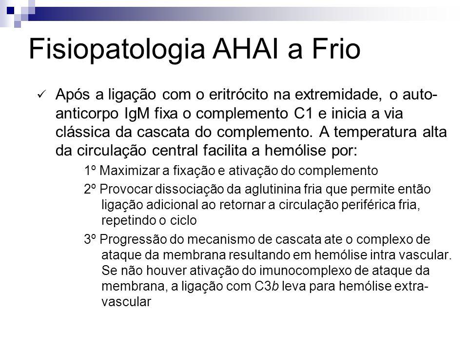 Fisiopatologia AHAI a Frio Após a ligação com o eritrócito na extremidade, o auto- anticorpo IgM fixa o complemento C1 e inicia a via clássica da cascata do complemento.