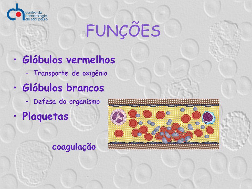 Glóbulos vermelhos –Transporte de oxigênio Glóbulos brancos –Defesa do organismo Plaquetas coagulação FUNÇÕES