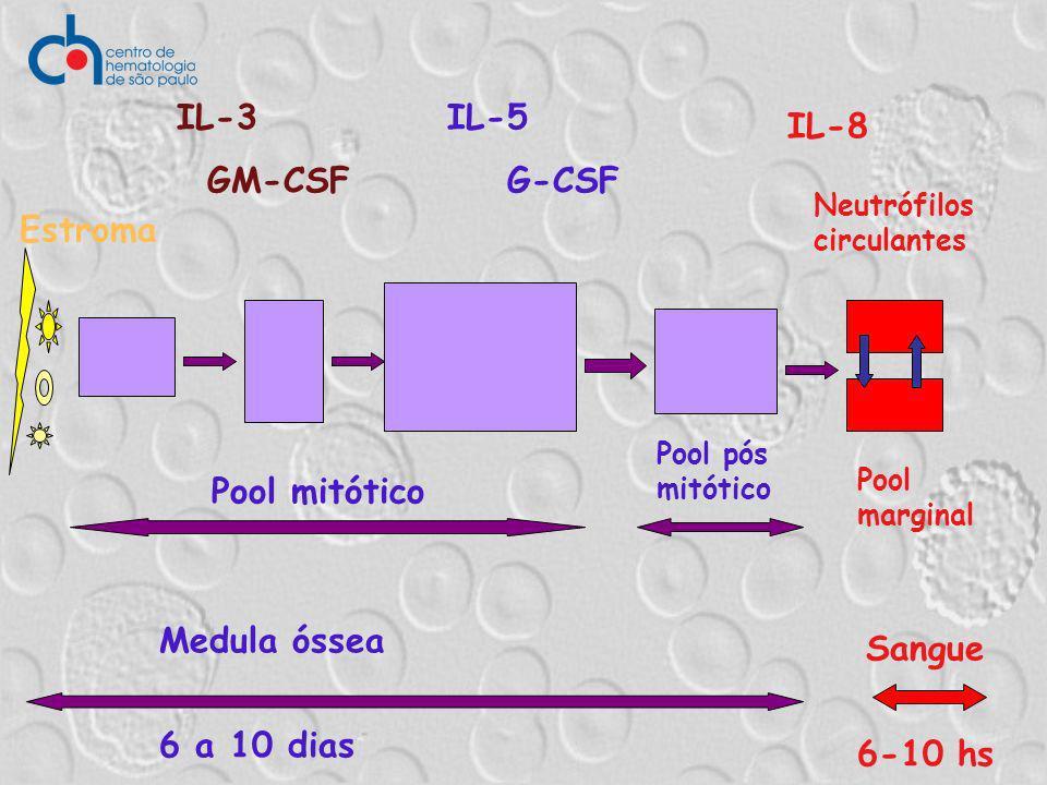 Medula óssea 6 a 10 dias Sangue 6-10 hs Estroma Pool mitótico Pool pós mitótico Neutrófilos circulantes Pool marginal IL-3 GM-CSF IL-5 G-CSF IL-8