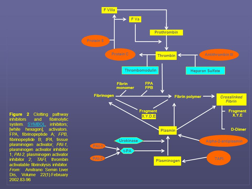 Figure 2 Clotting pathway inhibitors and fibrinolytic system. SYMBOL, inhibitors; [white hexagon], activators. FPA, fibrinopeptide A; FPB, fibrinopept