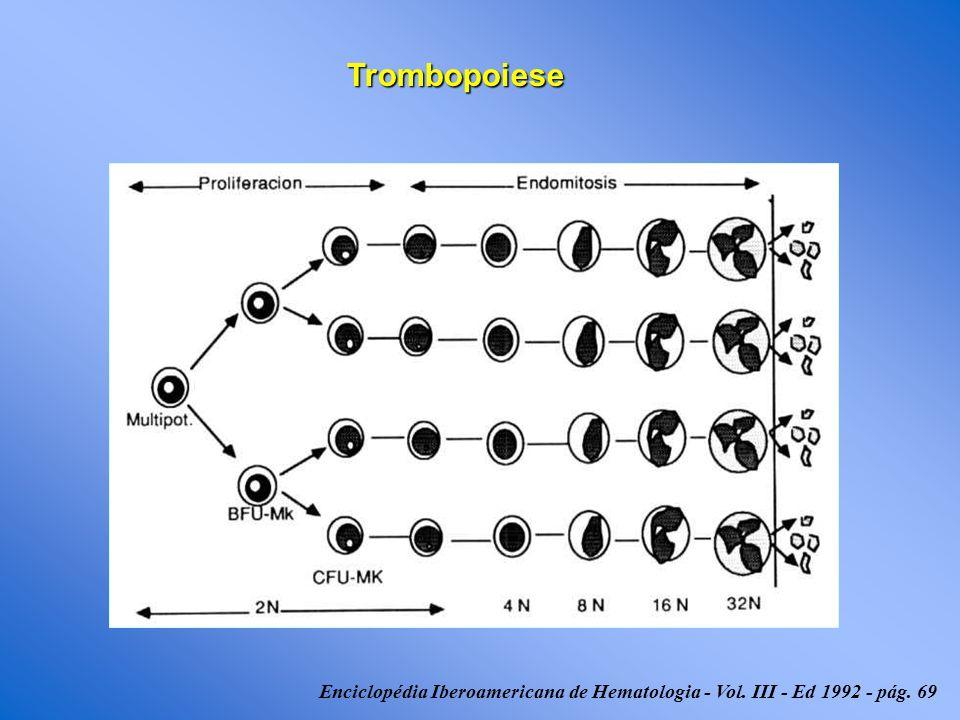 Enciclopédia Iberoamericana de Hematologia - Vol. III - Ed 1992 - pág. 69 Trombopoiese