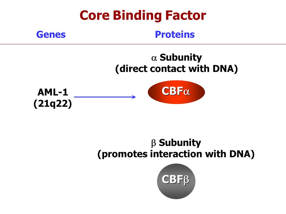 Genes CBF Subunity (promotes interaction with DNA) Subunity (direct contact with DNA) Proteins CBF AML-1 (21q22) Core Binding Factor