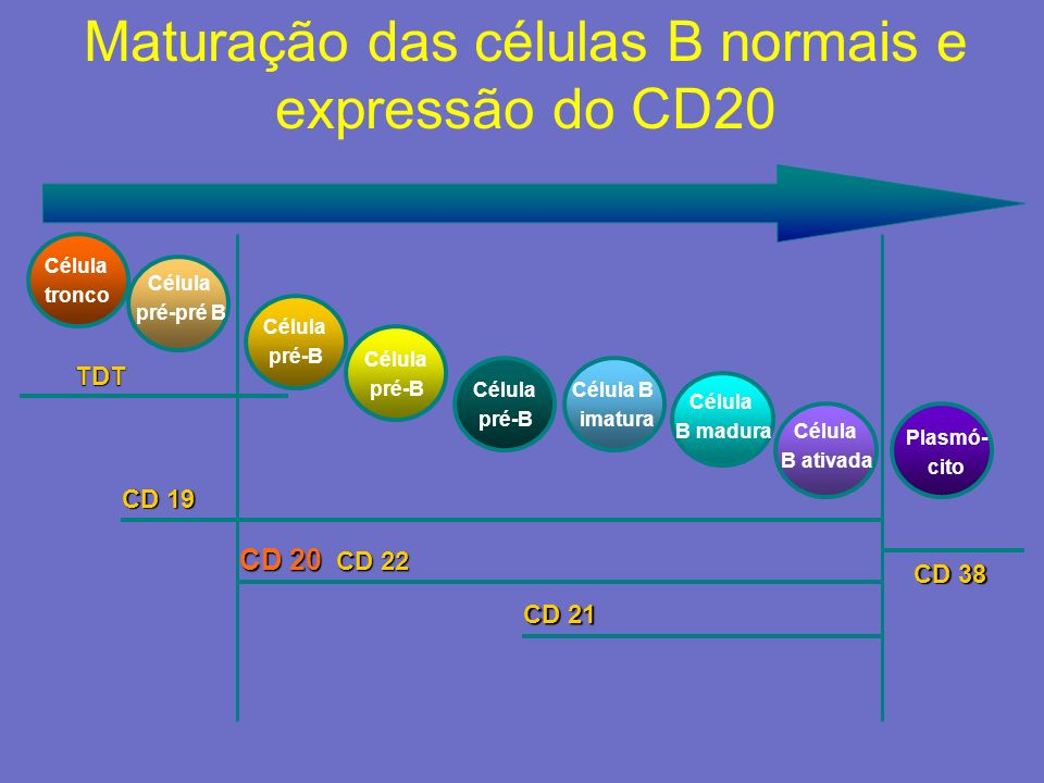Expressão antigênica na linhagem de células-B doentes Pré-BB precoceB- MaduraB Plasmacitóide ±CD5 CD19 CD20 CD22 CD52 PlasmócitoB Intermediária ??.
