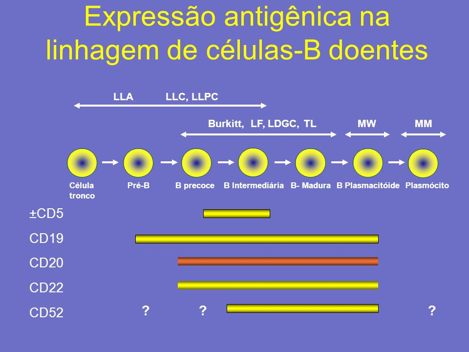 LINFOMA LINFOBLÁSTICO Núcleo redondo ou oval e cromatina fina e dispersa.
