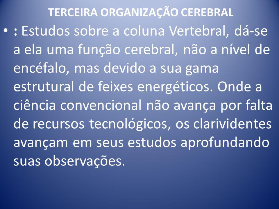 TERCEIRA ORGANIZAÇÃO CEREBRAL : Estudos sobre a coluna Vertebral, dá-se a ela uma função cerebral, não a nível de encéfalo, mas devido a sua gama estrutural de feixes energéticos.
