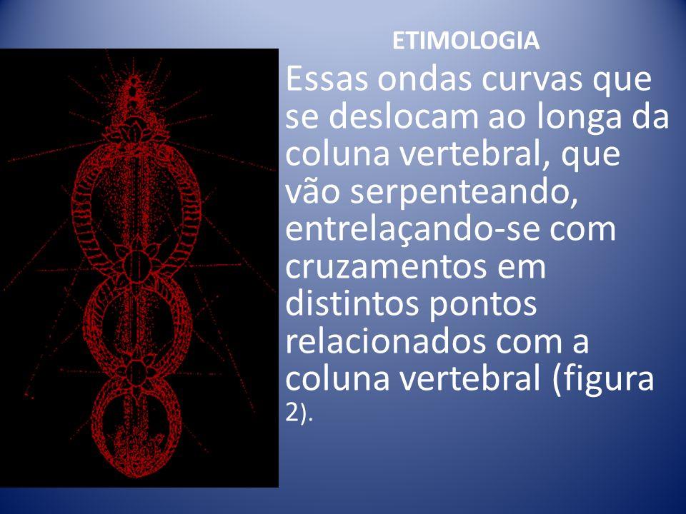 ETIMOLOGIA Essas ondas curvas que se deslocam ao longa da coluna vertebral, que vão serpenteando, entrelaçando-se com cruzamentos em distintos pontos