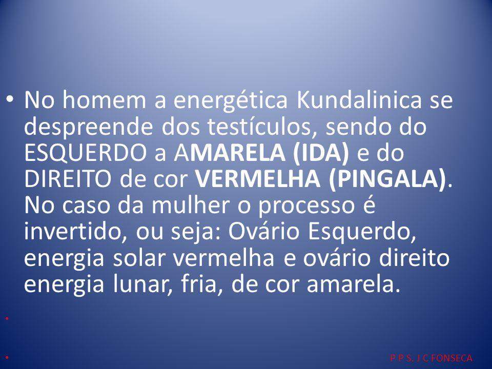 No homem a energética Kundalinica se despreende dos testículos, sendo do ESQUERDO a AMARELA (IDA) e do DIREITO de cor VERMELHA (PINGALA). No caso da m