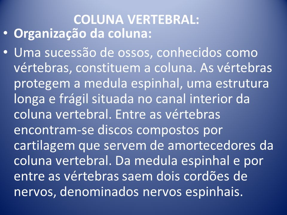 COLUNA VERTEBRAL: Organização da coluna: Uma sucessão de ossos, conhecidos como vértebras, constituem a coluna. As vértebras protegem a medula espinha