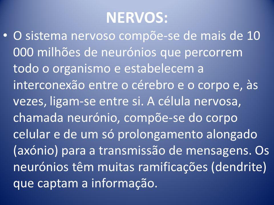 NERVOS: O sistema nervoso compõe-se de mais de 10 000 milhões de neurónios que percorrem todo o organismo e estabelecem a interconexão entre o cérebro e o corpo e, às vezes, ligam-se entre si.