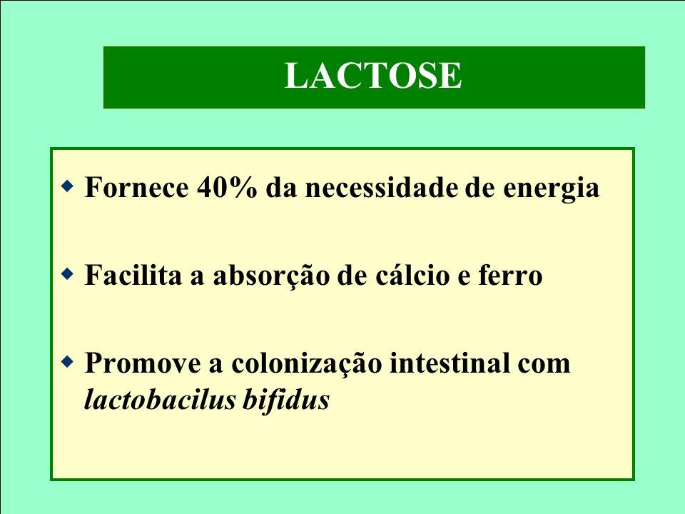 LACTOSE Fornece 40% da necessidade de energia Facilita a absorção de cálcio e ferro Promove a colonização intestinal com lactobacilus bifidus
