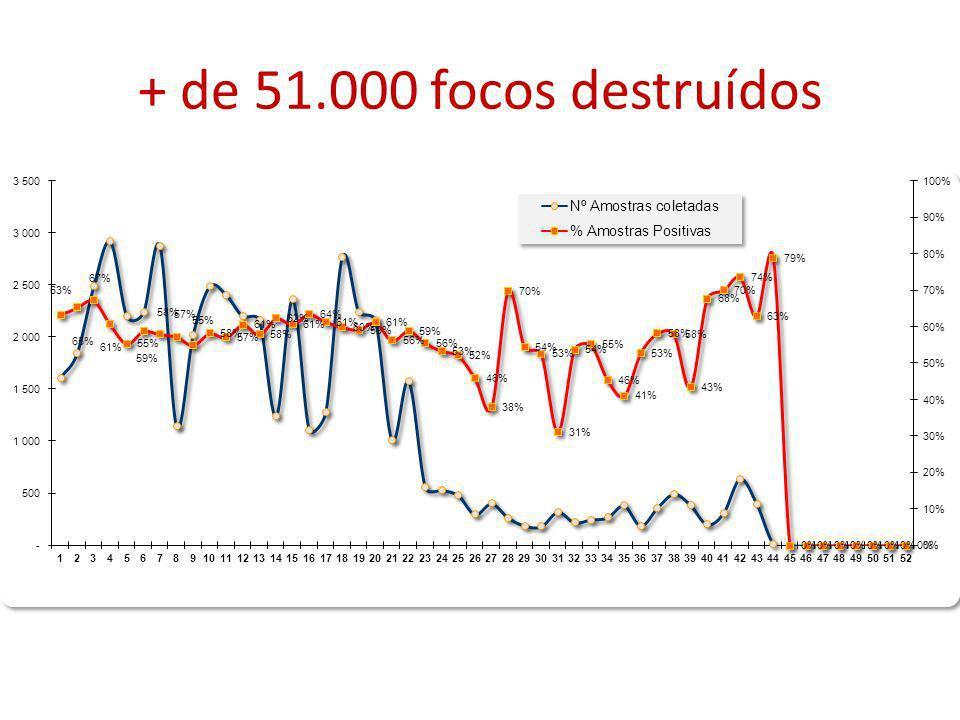 + de 51.000 focos destruídos