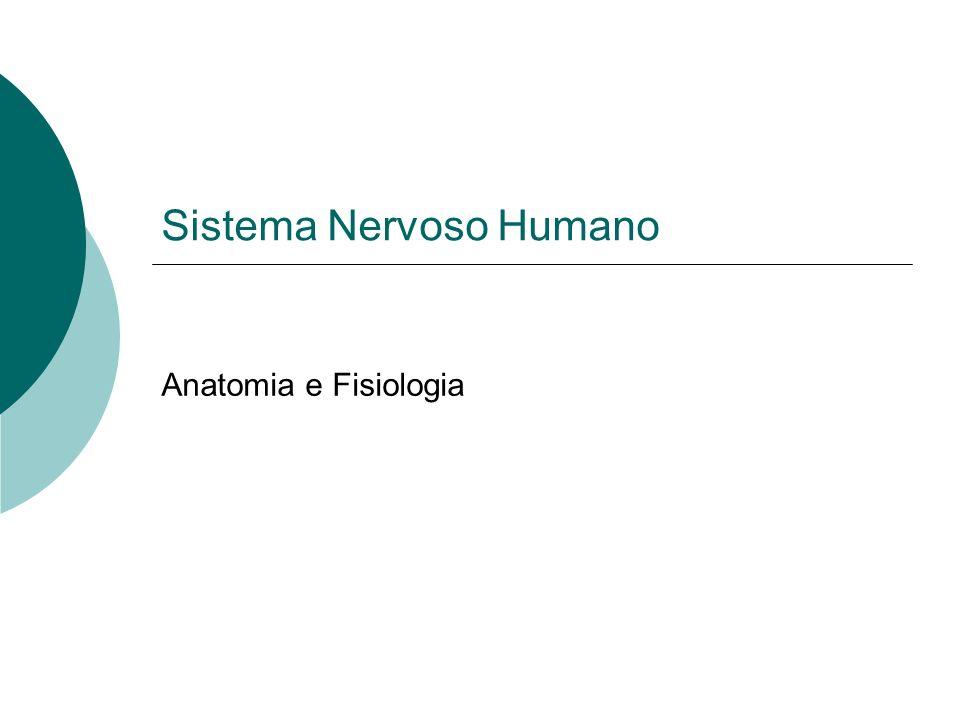 Sistema Nervoso Humano Anatomia e Fisiologia