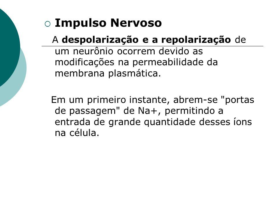 Impulso Nervoso A despolarização e a repolarização de um neurônio ocorrem devido as modificações na permeabilidade da membrana plasmática. Em um prime