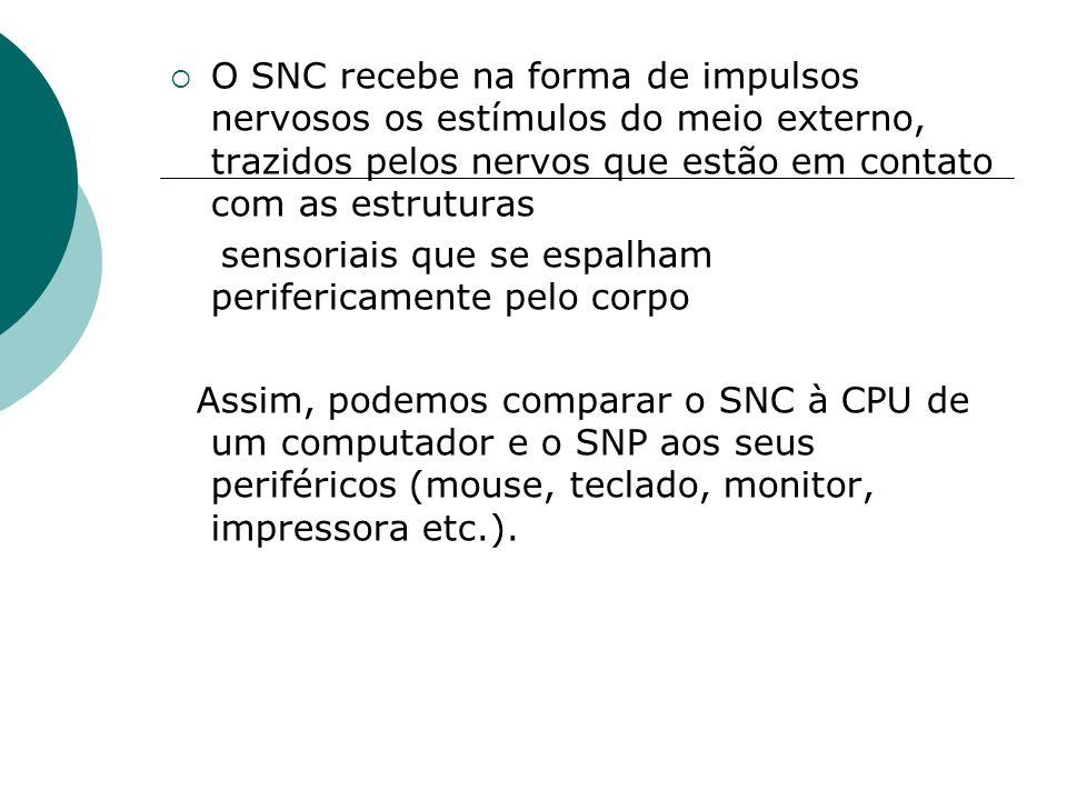 O SNC recebe na forma de impulsos nervosos os estímulos do meio externo, trazidos pelos nervos que estão em contato com as estruturas sensoriais que s