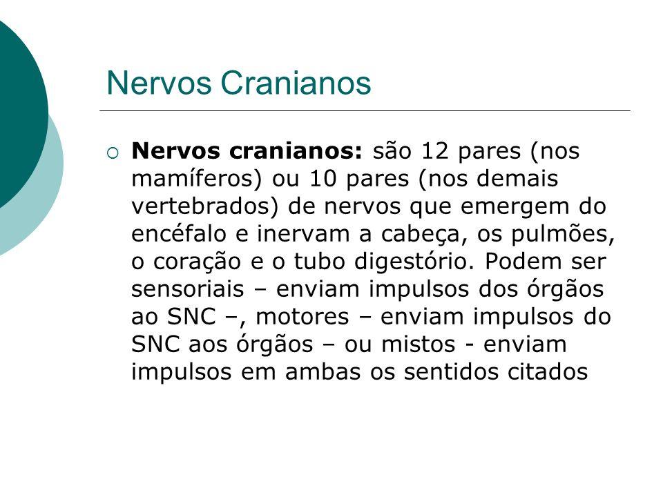Nervos Cranianos Nervos cranianos: são 12 pares (nos mamíferos) ou 10 pares (nos demais vertebrados) de nervos que emergem do encéfalo e inervam a cab