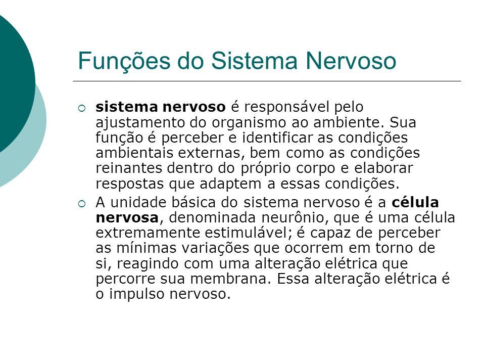 Funções do Sistema Nervoso sistema nervoso é responsável pelo ajustamento do organismo ao ambiente. Sua função é perceber e identificar as condições a