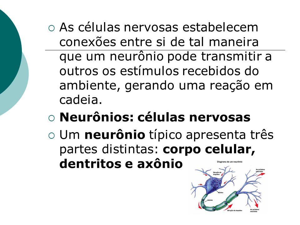 As células nervosas estabelecem conexões entre si de tal maneira que um neurônio pode transmitir a outros os estímulos recebidos do ambiente, gerando
