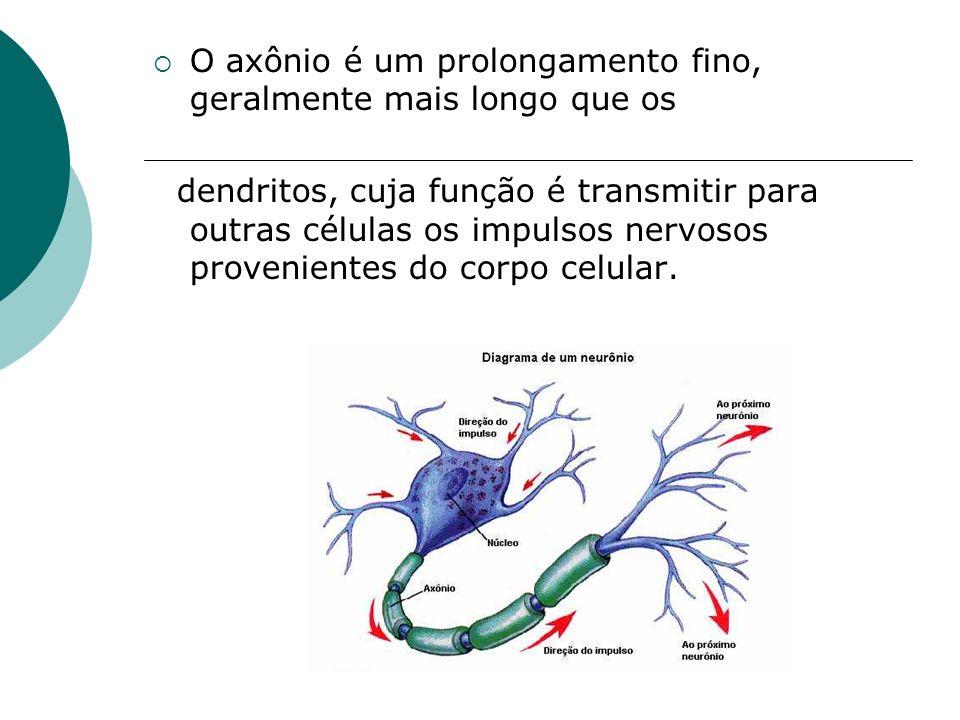 O axônio é um prolongamento fino, geralmente mais longo que os dendritos, cuja função é transmitir para outras células os impulsos nervosos provenient
