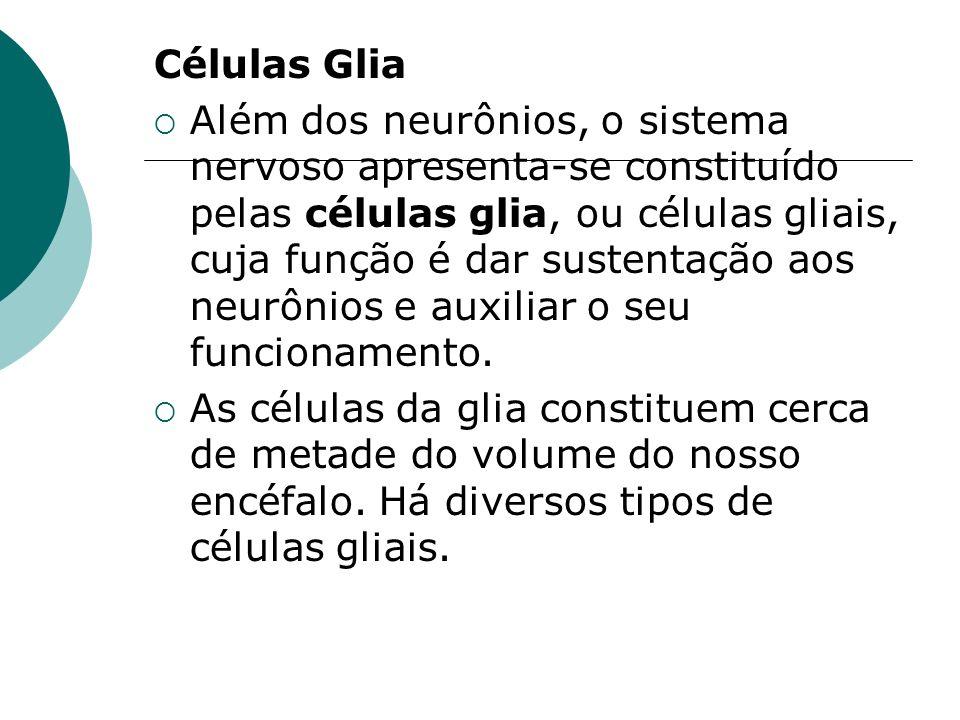 Células Glia Além dos neurônios, o sistema nervoso apresenta-se constituído pelas células glia, ou células gliais, cuja função é dar sustentação aos n