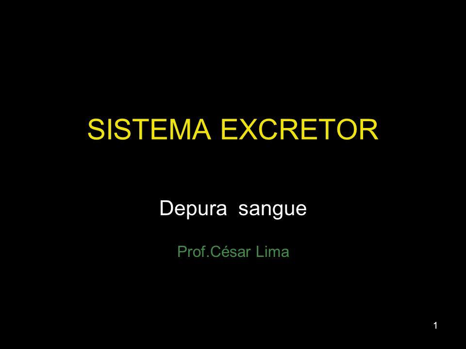 1 SISTEMA EXCRETOR Depura sangue Prof.César Lima